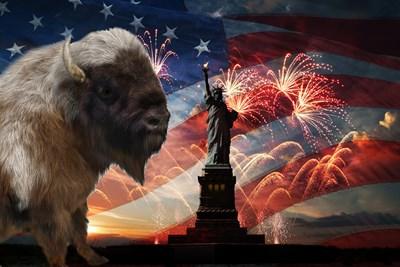 A patriotic buffalo