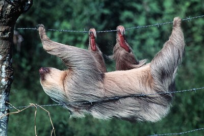 a sloth hanging on a wire