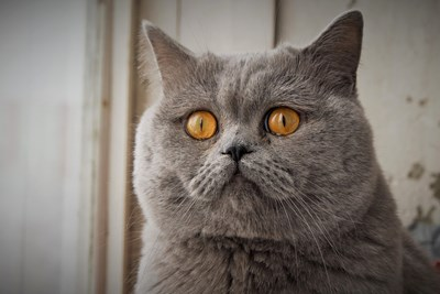 20 Cat Expressions That Sum up Your Life