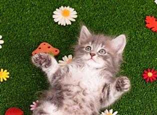 A kitten playing outside