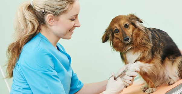 So You're Going to the Veterinarian? Here's What You Should Know