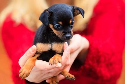 10 Tips for Adopting a Pet off Craigslist
