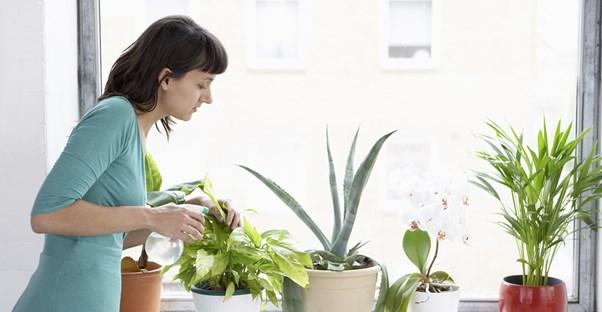 a woman waters multiple plants along her window sill