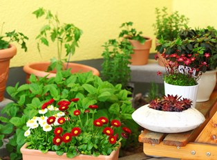small containers and plants dot a balcony