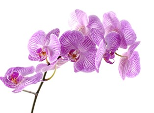 How To Grow Better Orchids Indoors