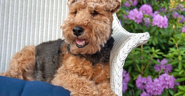 - Tips For Keeping Your Dog Off The Outdoor Furniture