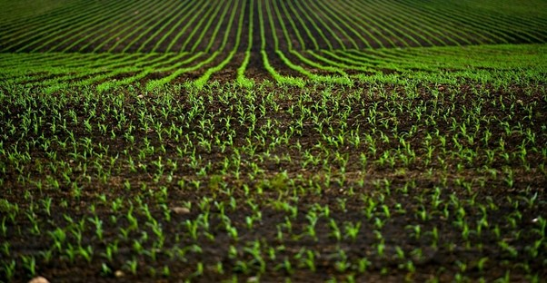 A large field of sustainable agriculture