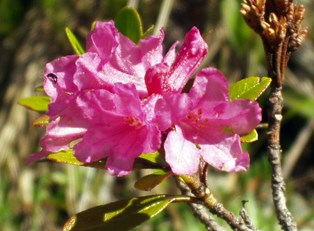 Growing Azaleas: 5 Secrets to the Masters Tournament's Beautiful Blooms