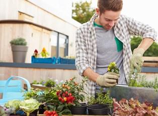 10 Hacks for Your Garden