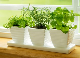 4 Container Garden Herbs to Grow for Your Kitchen